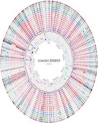 Prokaryotic Genome Collection : by Public Library of Science
