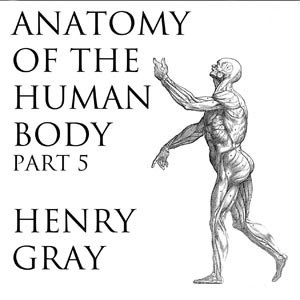 Anatomy of the Human Body, Part 5 (Gray'... by Gray, Henry