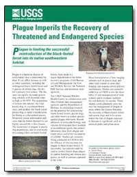 Plague Imperils the Recovery of Threaten... by Rocke, Tonie E.