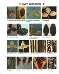 Clover Diseases I, Document E1692-1982 by Michigan State University