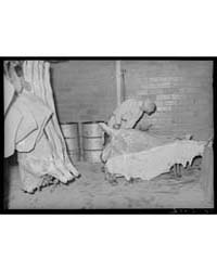 Skinning a Beef Carcass Packing Plant, S... by Library of Congress