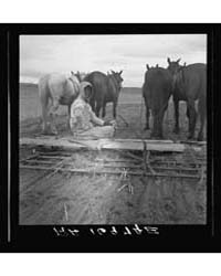 West Texas Tenant Farmer's Wife She Has ... by Library of Congress