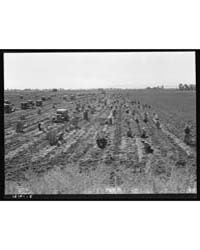 Near Meloland, Imperial Valley Large Sca... by Library of Congress