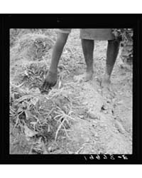 Thirteen Year Old Daughter of Negro Shar... by Library of Congress