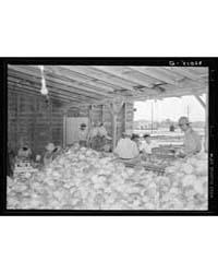 Sorting and Inspecting Cabbages Before P... by Library of Congress