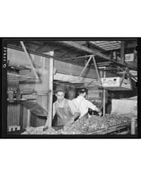 Packing Broccoli Elsa, Texas, Photograph... by Library of Congress