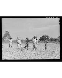 Chopping Cotton on Rented Land Near Whit... by Library of Congress