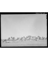 Camuy, Puerto Rico (Vicinity) Along the ... by Library of Congress
