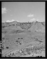 Barranquitas (Vicinity), Puerto Rico Tob... by Library of Congress
