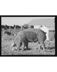 Terrebonne Project Schriever, Louisiana,... by Library of Congress