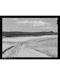Wheat Fields Near Havre, Montana, Photog... by Library of Congress
