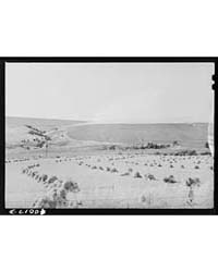 Barley in the Shockwhitman County, Washi... by Library of Congress