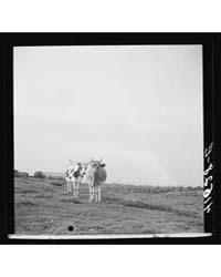 Untitled : Photograph 8C28902V, 1935 by Library of Congress