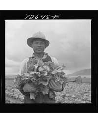 San Benito County, California Japanese-a... by Library of Congress