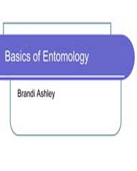 Basics of Entomology by Ashley, Brandi