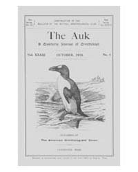 The Auk : 1916 Oct. No. 4 Vol. 33 Volume Vol. 33 by Murphy, Michael